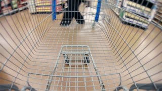 Grocery cart Wide angle sped up
