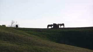 Group of Horses standing on hill eating