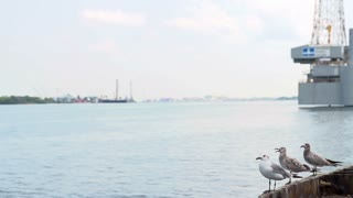 Group of Seagulls take off in slow motion