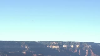 Hawks flying in Grand Canyon Valley