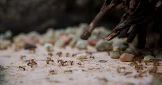 Honey ants drinking liquid 4k