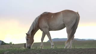 Horse eating grass at sunset on hill