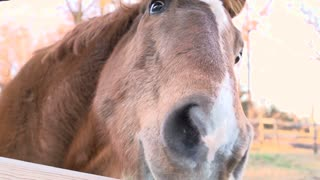 Horse face close up in slow motion