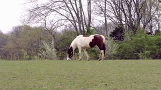 horse in field alone eating grass