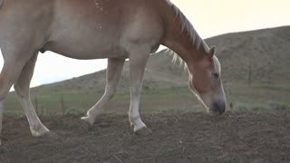 Horse kicking up dust in slow motion