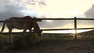 Horse on farm at sunset