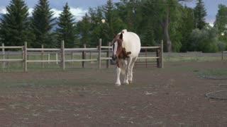 Horse on farm walking towards camera