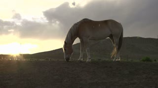 Horse on hill eating at sunset