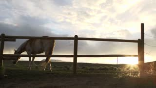 Horse walking by fence at sunset