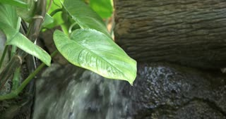 Jungle vegetation growing with waterfall in background 4k