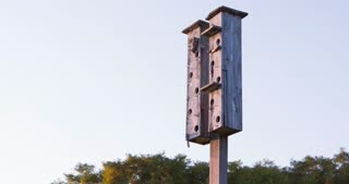 Large Bird house condominium in nature 4k
