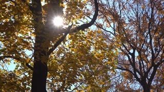 Leaves On Trees Changing Into Fall Colors With Bright Sun Between Branches 4 K
