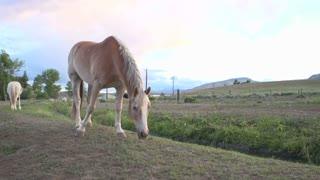 Light brown horse walking towards camera