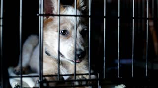 Lonely Puppy in Cage