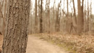 Man walking in woods rack focus from tree