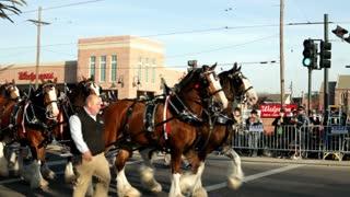 Mardi Gras Budweiser Carriage in Parade