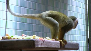 Monkeys eating fruit on ledge