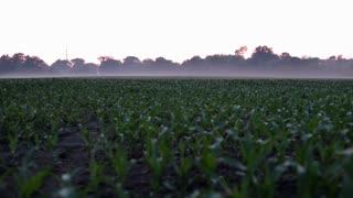 Morning Fog at sunrise over crops