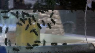 Multiple Bees in Glass Container