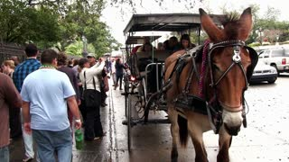 New Orlenas street with horse carriage ride