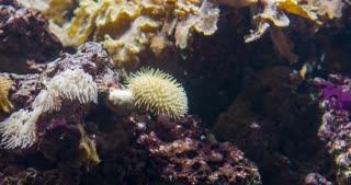Ocean wildlife on bottom of sea with fish 4k