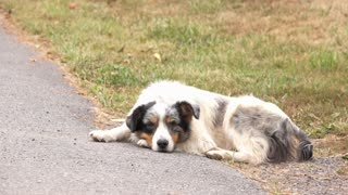 Old and rough looking dog sitting by side of street 4k