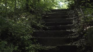 Old brick steps in forgotten forest path 4k