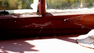 Old spiderweb in window