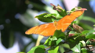 Orange butterfly sitting on leaf
