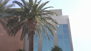 Palm tree in front of office building on sunny day 4k