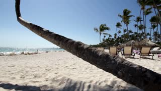 Palm Tree on beach camera pan and tilt