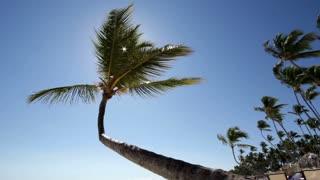 Palm tree with sun shining through