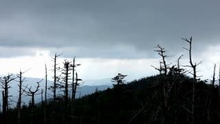Pan of Cloudy Mountains with trees in foreground