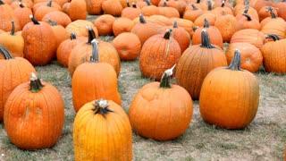 Pan of pumpkins sitting in grass