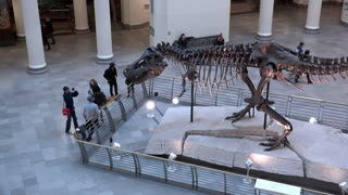 People viewing Tyrannosaurus Rex on display at Field Museum Chicago 4k
