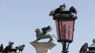Pigeons on lamp post in downtown Venice