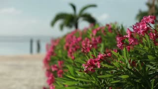 Pink flowers blowing in wind near ocean