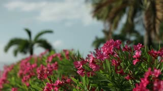 Pink flowers with Palm trees in background