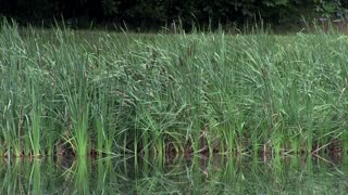 Pond surrounding by growing foliage