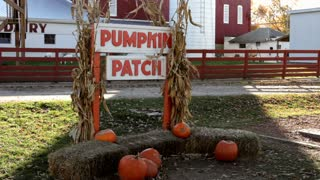 Pumpkin patch sign at farm