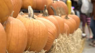 Pumpkins for sale at farmers market 4k