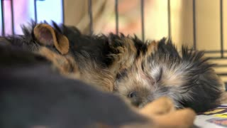 Puppies sleeping in cage