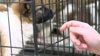 Puppies up for adoption in cages