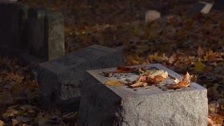 Putting pink flowers on gravestone in fall season 4k