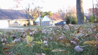Racking leaves from front yard
