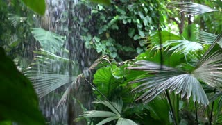 Rain forest scene in slow motion with waterfall