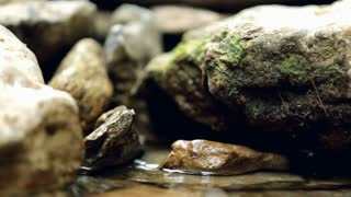 Rocks and Moss in shallow stream