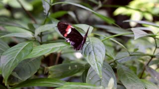 Rotate around Butterfly on Leaf