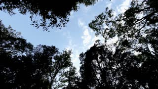 Rotating looking up at trees and clouds in forest