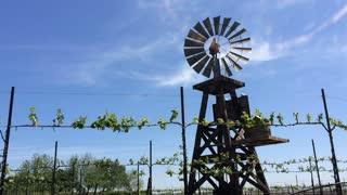 Rotating windmill in vineyard